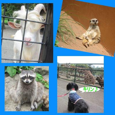 2011.7.2動物2