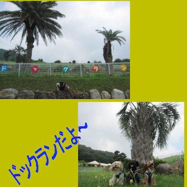 2011.7.2どっくらん