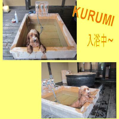 2011.7.2くるみ入浴