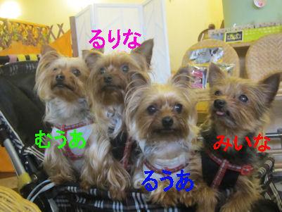 2011.6.27みいなふぁみり~