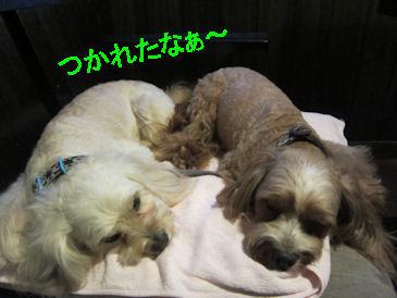 2011.7.2疲れたなぁ~