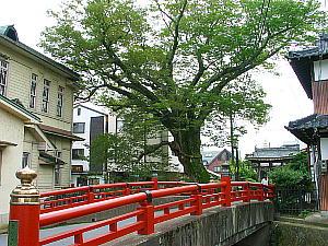 木の根橋と柏原支所