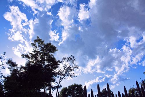 嵐の後の上野