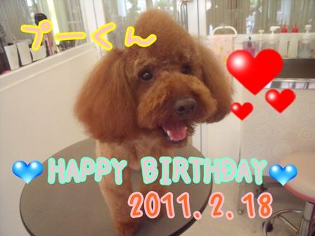 ぷー誕生日