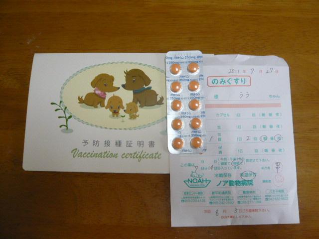 011_20110727113231.jpg