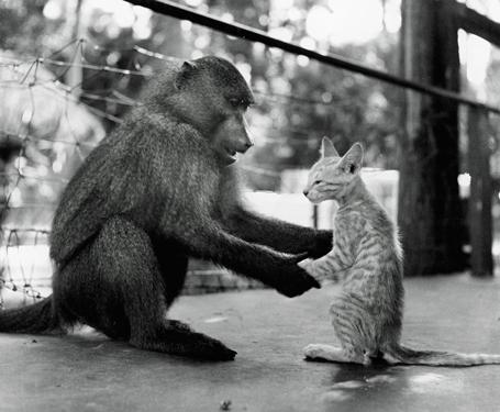 ヒヒと子猫の特訓
