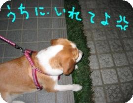 20071018001431.jpg