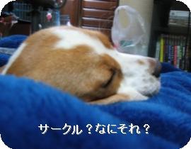 20071025003211.jpg