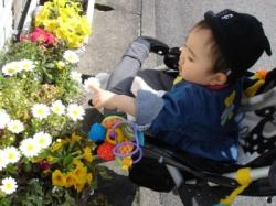 お花が気になる