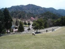 六甲山牧場1