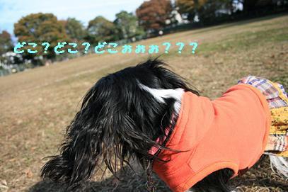 2007/11/26 モールデート2