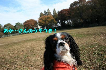 2007/11/26 モールデート3