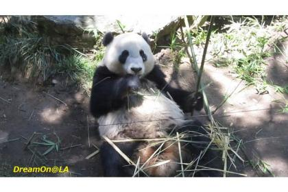 Panda0807_02sw