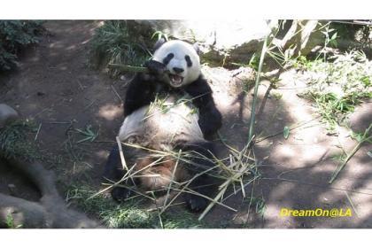 Panda0807_03sw