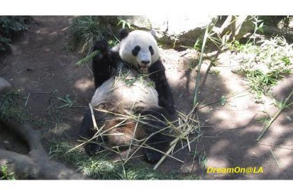 Panda0807_04sw