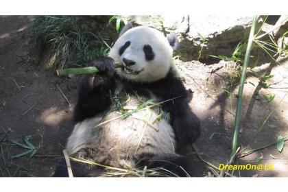 Panda0807_05sw