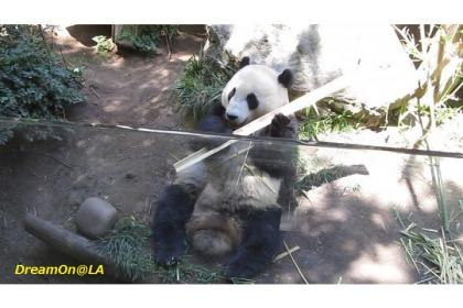Panda0807_09sw