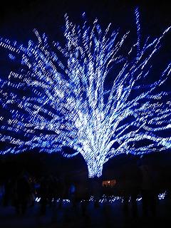 昭和記念公園のクリスマス・イルミネーション6