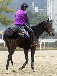 今年の有馬記念が引退レースとなるディープインパクト、武豊騎乗