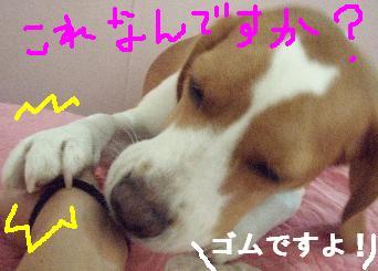 go1_20071220201457.jpg