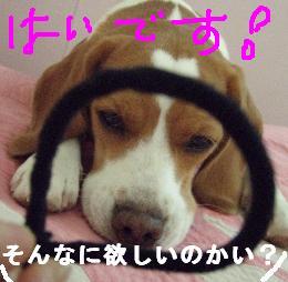 go4_20071220201556.jpg