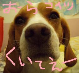 yamo10.jpg