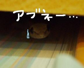 yamo11.jpg