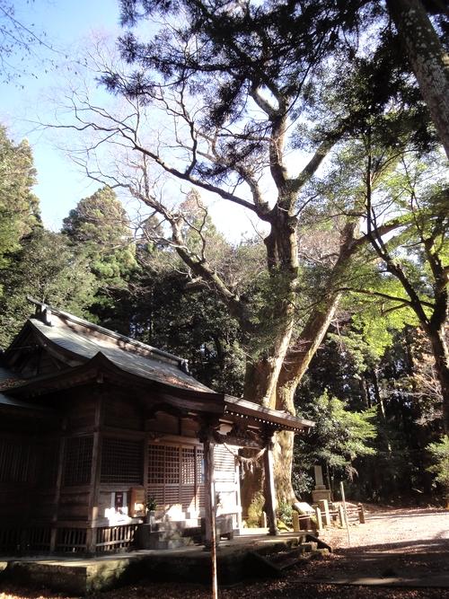 221205 八幡大神社17