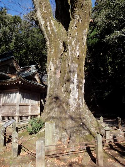 221205 八幡大神社25-1