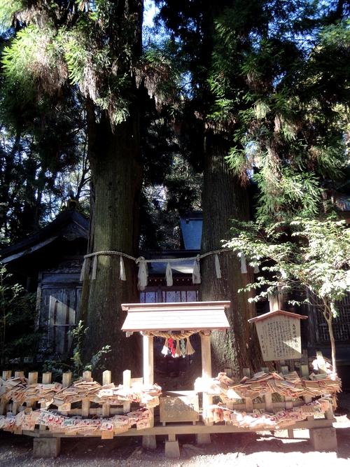 221205 高千穂神社12