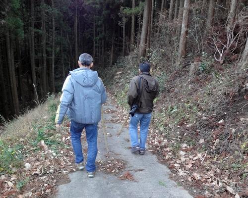 221205 祇園の大ヒノキ4
