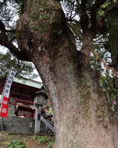 230101 北岡神社3-3