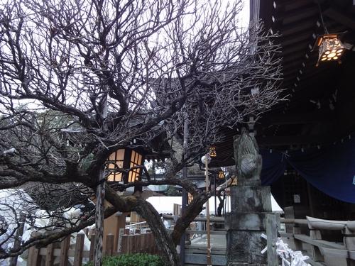 230101 健軍神社5