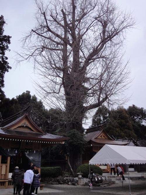 230101 健軍神社3