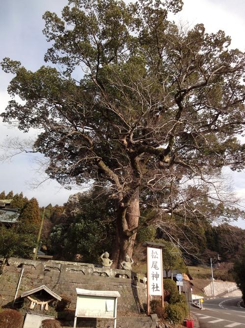 230115 松尾神社1