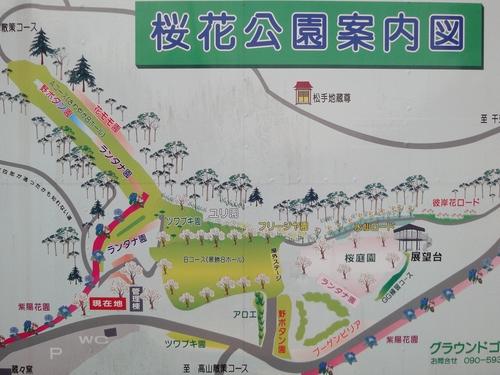 230121 維和桜花公園1