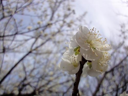 230219 谷尾崎梅林公園9