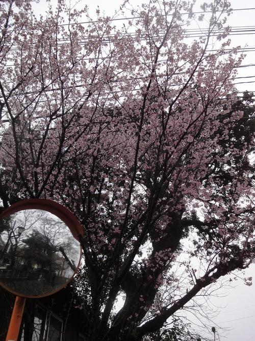 230321 春感ウォーク7