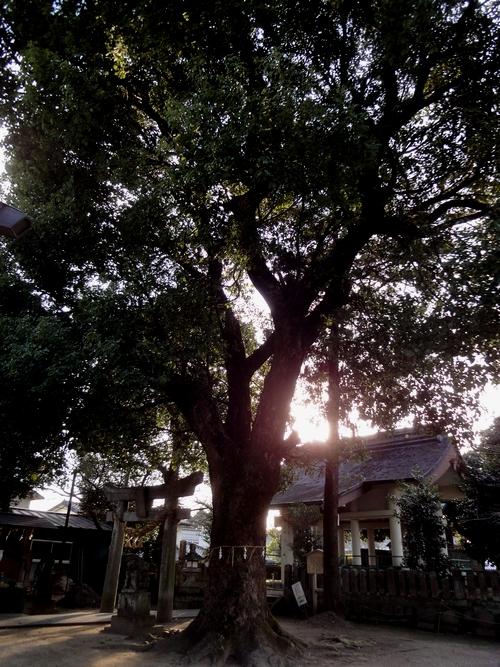 230305 日田神社5