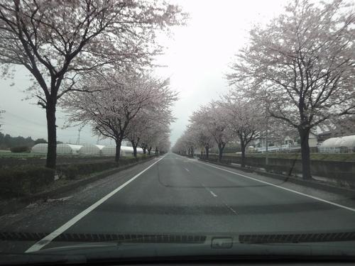 230409 南阿蘇桜巡り1