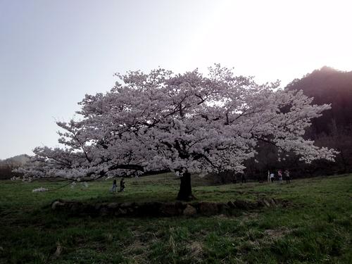 230409 南阿蘇桜巡25