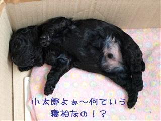 小太郎の寝姿。。。