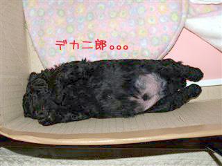 デカ二郎の寝姿。。。