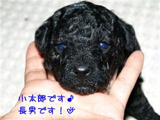小太郎のアップ