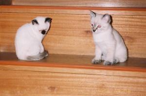 写真屋さんでネガから取り込み~タヌさん&エピさん(95/06/23/撮影)