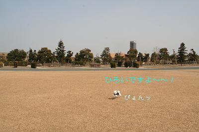 IMG_1517ひろい1