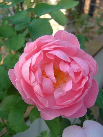 mary-rose09-2.jpg