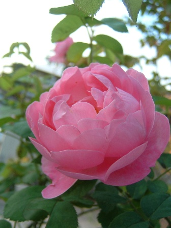 mary-rose09-3.jpg