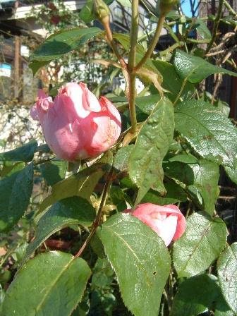 mary-rose11.jpg