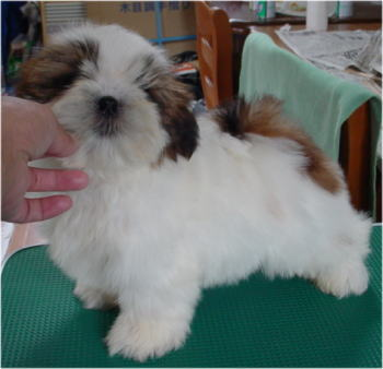 ウリ坊、生後2.5ヶ月
